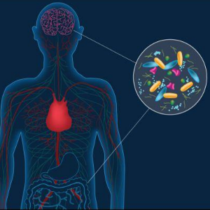 AVC e Epilepsia podem estar relacionados às bactérias intestinais
