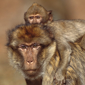 Ressonância mórfica: A teoria do centésimo macaco